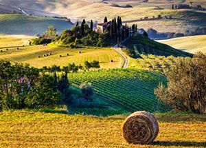 Farmhouses and vineyards in Tuscany